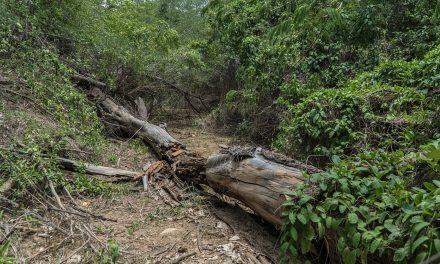 Es posible que el daño al arroyo Bruno sea irreversible